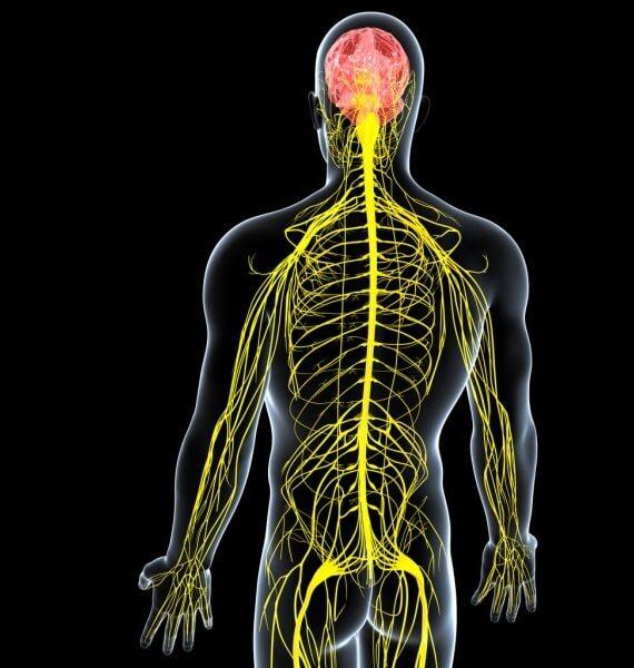 Doenças do Sistema Nervoso Periférico (Mononeuropatias e Polineuropatias)